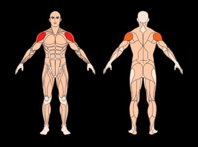 arnold press muskelgruppen