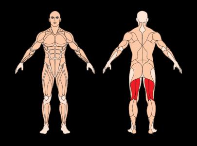 beinbeugen-sitzend-muskelgruppen