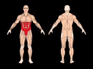 criss-cross-muskelgruppen