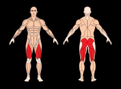 Kniebeugen-Multipresse-Muskelgruppen-