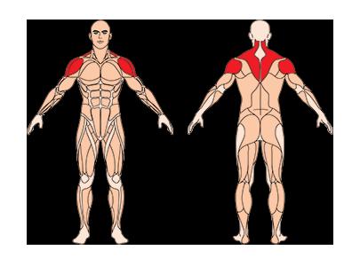 muskelgruppen_frontheben-langhantel