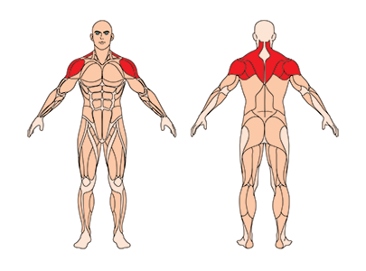 muskelgruppen_reverse-flys