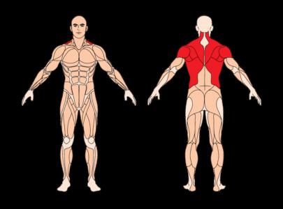 Rudern am Geraet Muskelgruppen