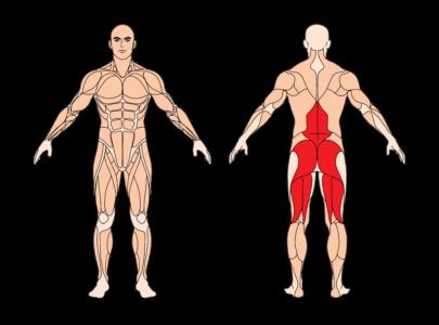 rumaenisches-kreuzheben-muskelgruppen
