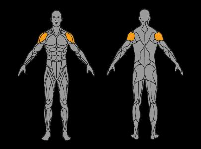 Schulterdruecken Muskelgruppen