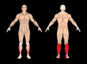 wadenheben-stehend-muskelgruppen