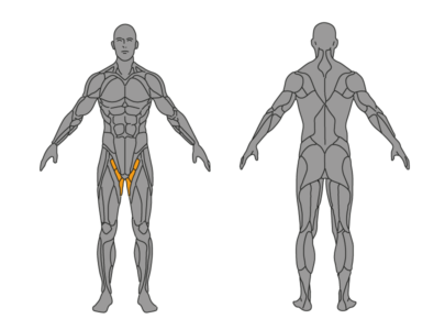 adduktion muskelgruppen