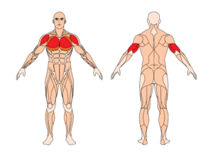 enges-bankdruecken-muskelgruppe