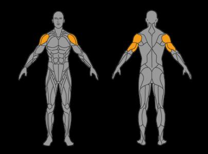 handstand muskeln