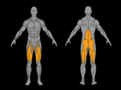 kniebeugen muskelgruppen