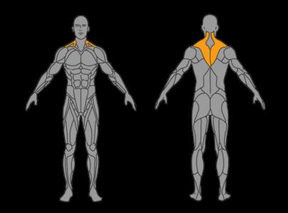 nackenmuskel dehnen