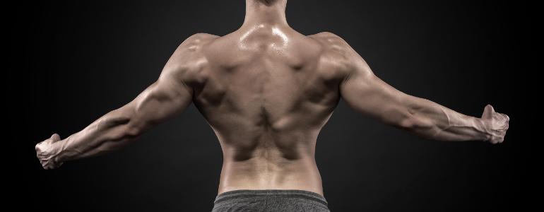 Pyramidentraining Muskelaufbau