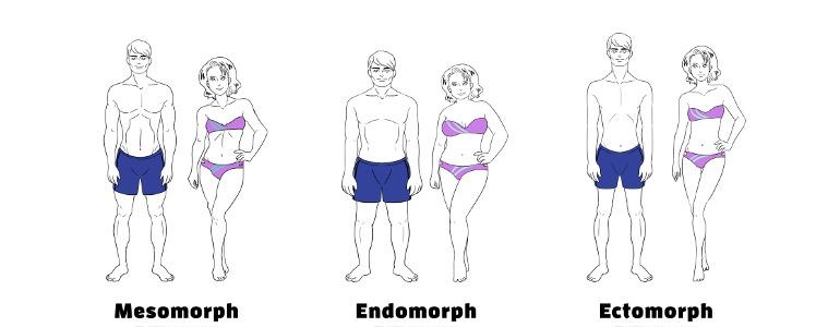 stoffwechseltyp endomorph